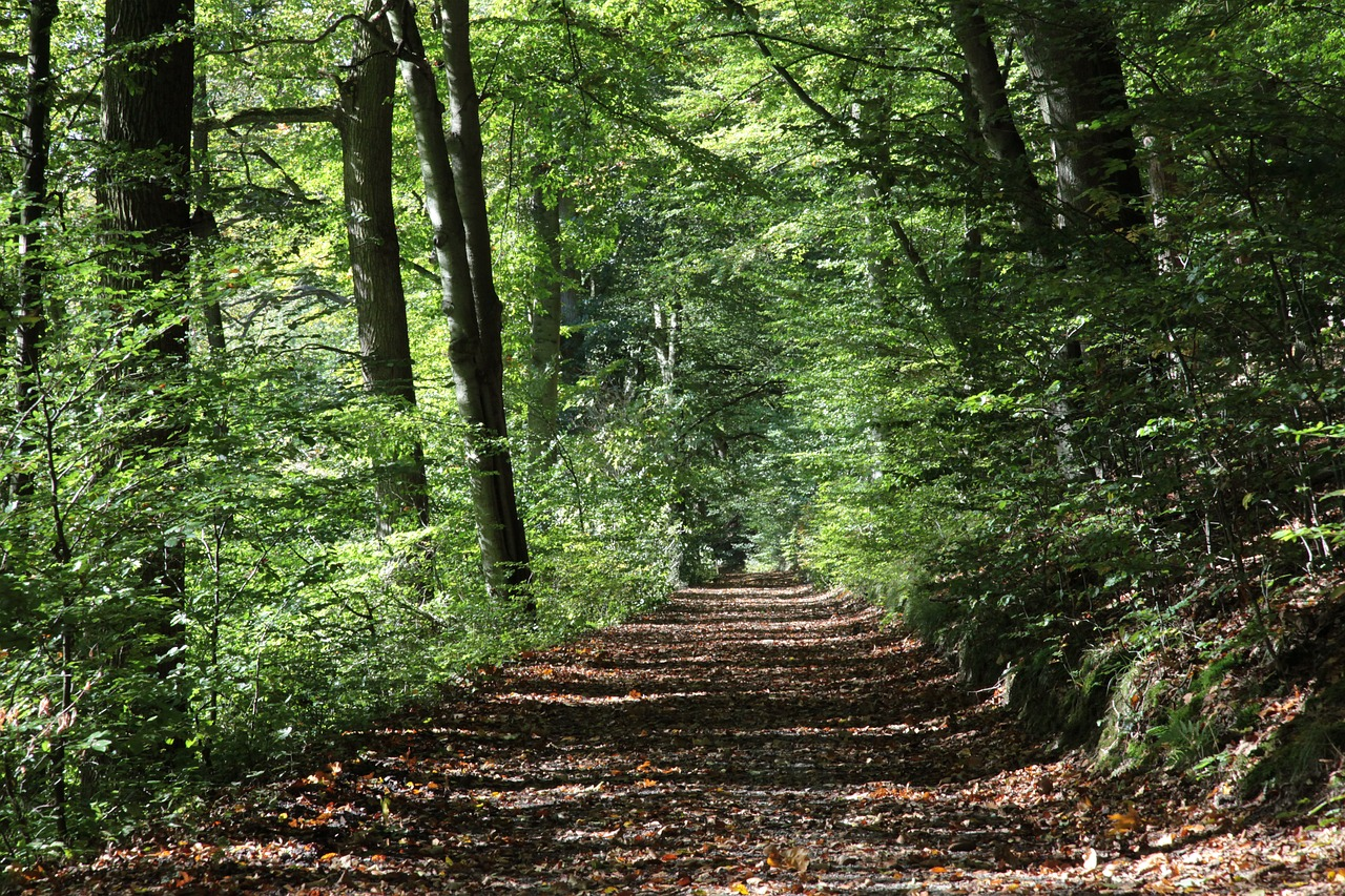 forest-path-2808216_1280